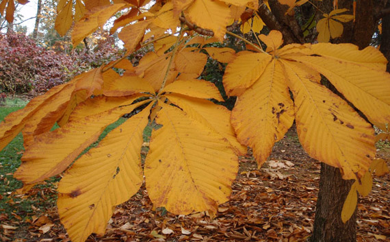 Plant Kingdom Plants Are Our Passion Trees Shrubs